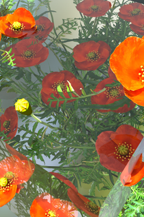 blue_poppies_highres_2.png