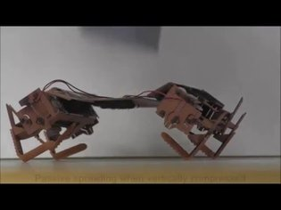 Cockroaches traverse crevices, crawl rapidly in confined spaces, and inspire a soft, legged robot
