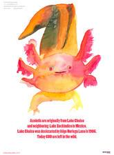 Axolotl Poster by Maria Thereza Alves