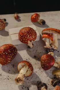 Telluride Mushroom Festival by Caroline Tompkins for Vogue