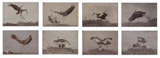 Ottomar Anschutz, Untitled (1884)