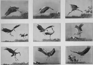 Otto Anschutz, Untitled (1884)