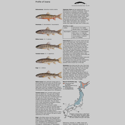Trout and Seasons of The Mountain Village - Profile of Iwana
