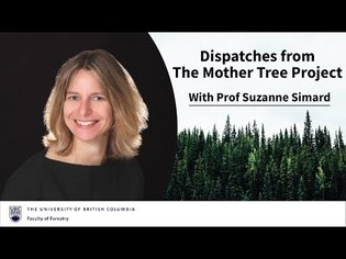 Suzanne Simard - Dispatches from The Mother Tree Project