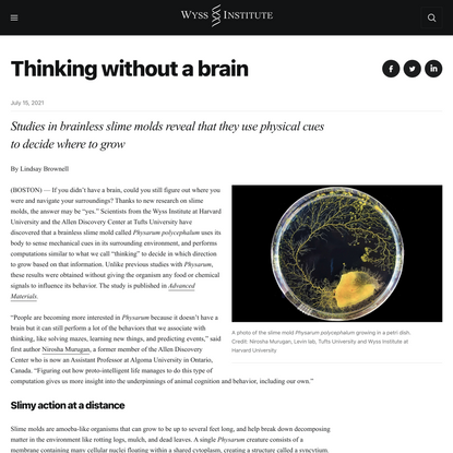 Thinking without a brain