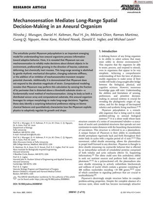 Mechanosensation Mediates Long-Range Spatial Decision-Making in an Aneural Organism