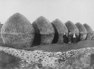 Tom Kent's photograph of prize-winning haystacks, Orkney, 1930
