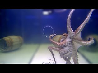 Big Octopus VS Small Holes - Incredible Squeezing Abilities
