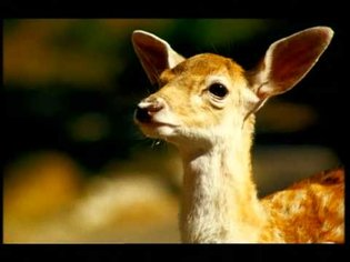 PlayStation 2 advert: Bambi | 2001 | #20YearsOfPlay