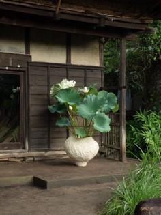 迎え花 -WELCOMING LOTUS-   WORKS   BOTANICAL ARRANGEMENTS TSUBAKI