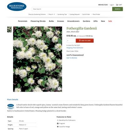 Fothergilla Gardenii -- Bluestone Perennials