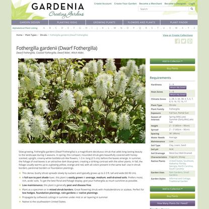 Fothergilla gardenii (Dwarf Fothergilla)