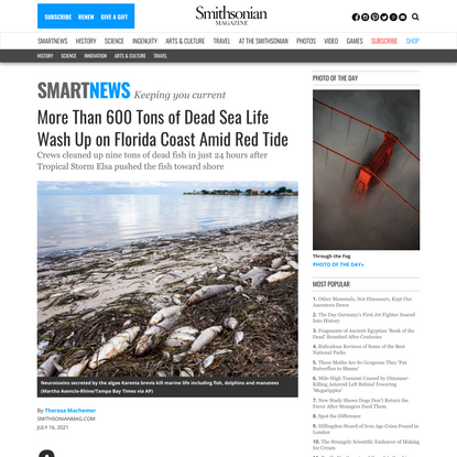 More Than 600 Tons of Dead Sea Life Wash Up on Florida Coast Amid Red Tide