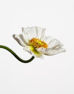 101_flower_3.jpg
