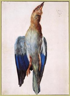 Dead Bluebird Albrecht Durer 1512