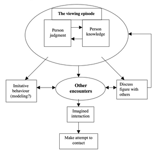 Stages in the development of a parasocial relationship