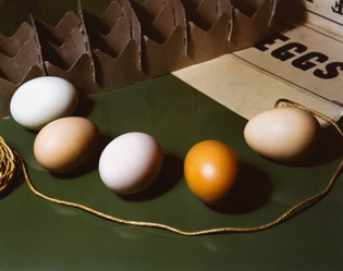 imogen-cunningham-five-eggs-1951-1-1024x809.jpg