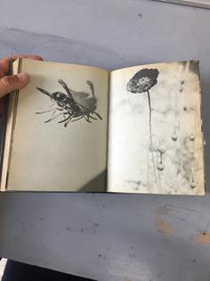Børnenes Billedbog - Jesper Høm 1975