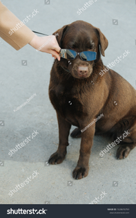 stock-photo-man-putting-sunglasses-on-her-cute-brown-canine-friend-so-he-would-look-above-lowered-glasses-in-1528676759.jpg