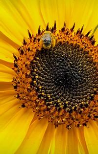 pollen pal