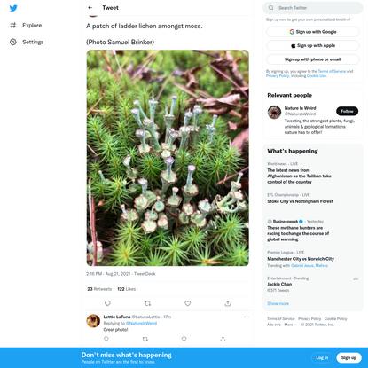 "Nature Is Weird on Twitter: ""A patch of ladder lichen amongst moss.(Photo Samuel Brinker) pic.twitter.com/Amf0XmYpJ0 / Twitter"""