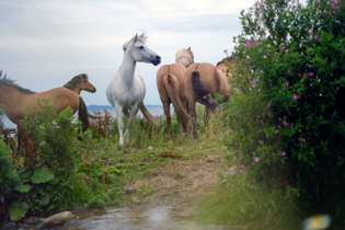carl-kleiner-2020-august-sweden-skane-animal-horse-04-1920x1280.jpg