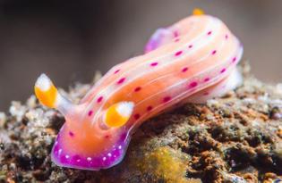sea slug - colors