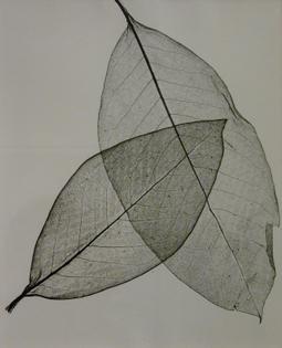 Herbert Matter, Two Transparent Leaves, 1945