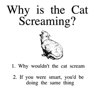 Why is the cat screaming
