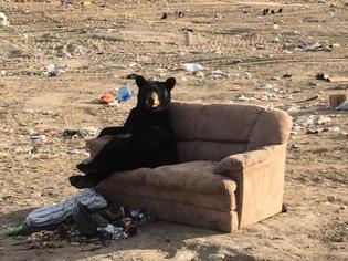 Bears caught relaxing at northern Manitoba dump