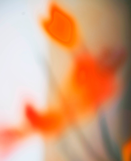 turunc-squoosh_19.jpg-w=2048-q=90