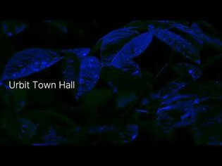 bump: urbit town hall ii