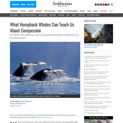 What Humpback Whales Can Teach Us About Compassion