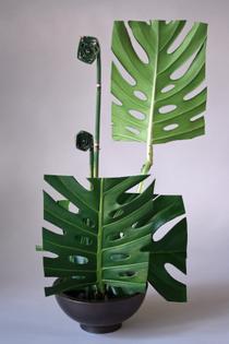 ikebana-2011-3141.jpg
