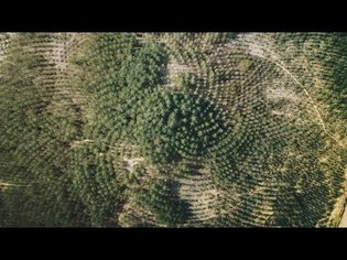 A Gift to the Future: Tree Mountain by Agnes Denes | IN THE WORKS | THE SHED