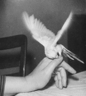 "Len Howard, ""Living with Birds,"" 1956"