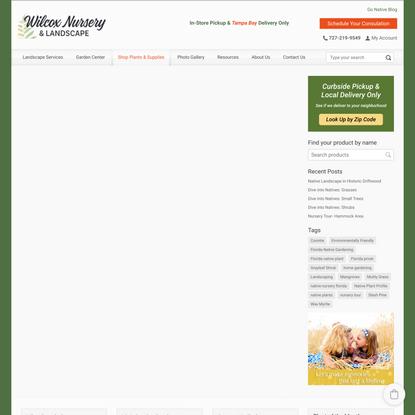 Pinebarren Goldenrod (S. fistulosa)- Florida Native Wildflower Seeds | Buy Florida Friendly Plants - Largo and St. Petersburg