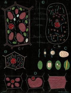 d1e395275443f7879cc5fc81c72825de-biology-art-botanical-illustration.jpg