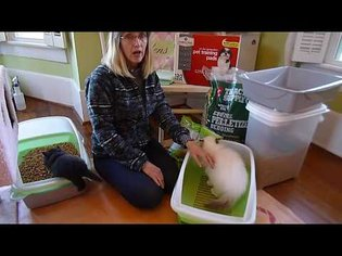 THE ORIGINAL - The Easiest, Most Inexpensive, Natural Pine Pellet Litter Box System