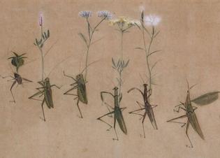 Yokoyama Seiki (1792-1864)
