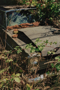 Natures Revenge - Canon AE-1 | 50mm f/1.8 | Portra 400