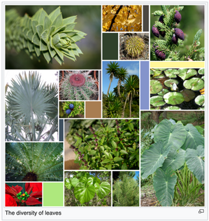 The diversity of leaves