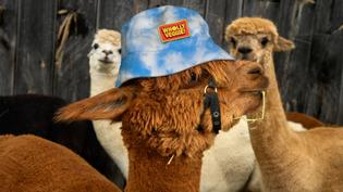 Wholly Veggie Bucket Cap