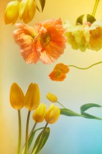 goodspeed_gonot_twelve_tulips.png?format=1500w