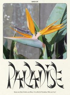 Bird of Paradise / Flowers by Carmen Nácher