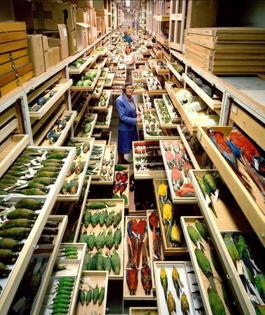 Natural history museum storage
