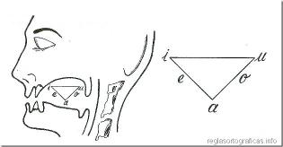 articulacindelasvocales._thumb1.jpg