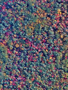 New Hampshire Fall Foliage