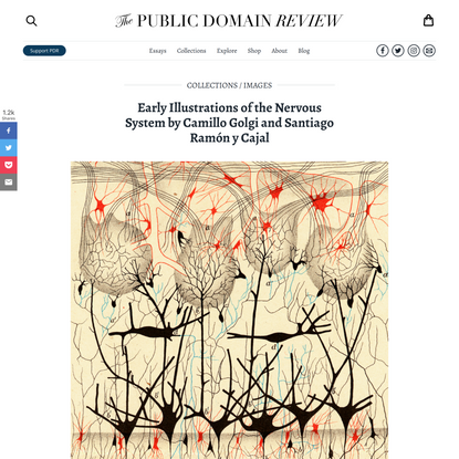 Early Illustrations of the Nervous System by Camillo Golgi and Santiago Ramón y Cajal