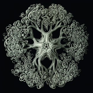 ernst-haeckel-1904.-lithograph-of-an-ophidea-a-type-of-echinoderm-similar-to-a-starfish-1200x1197.jpg